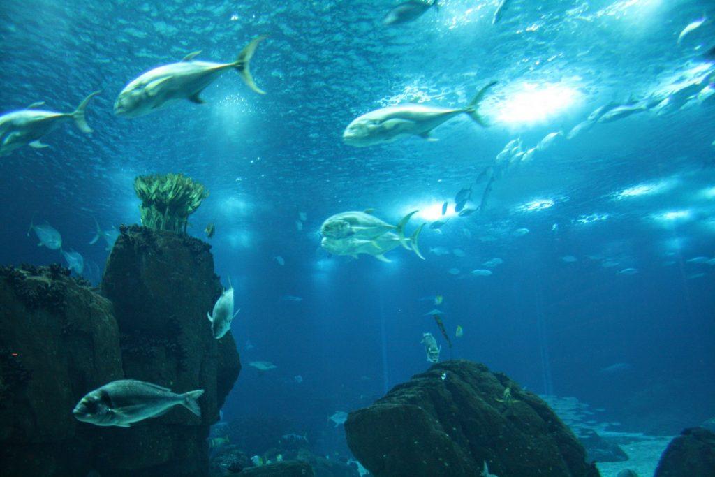 Vissen in het Oceanário de Lisboa, Lissabon