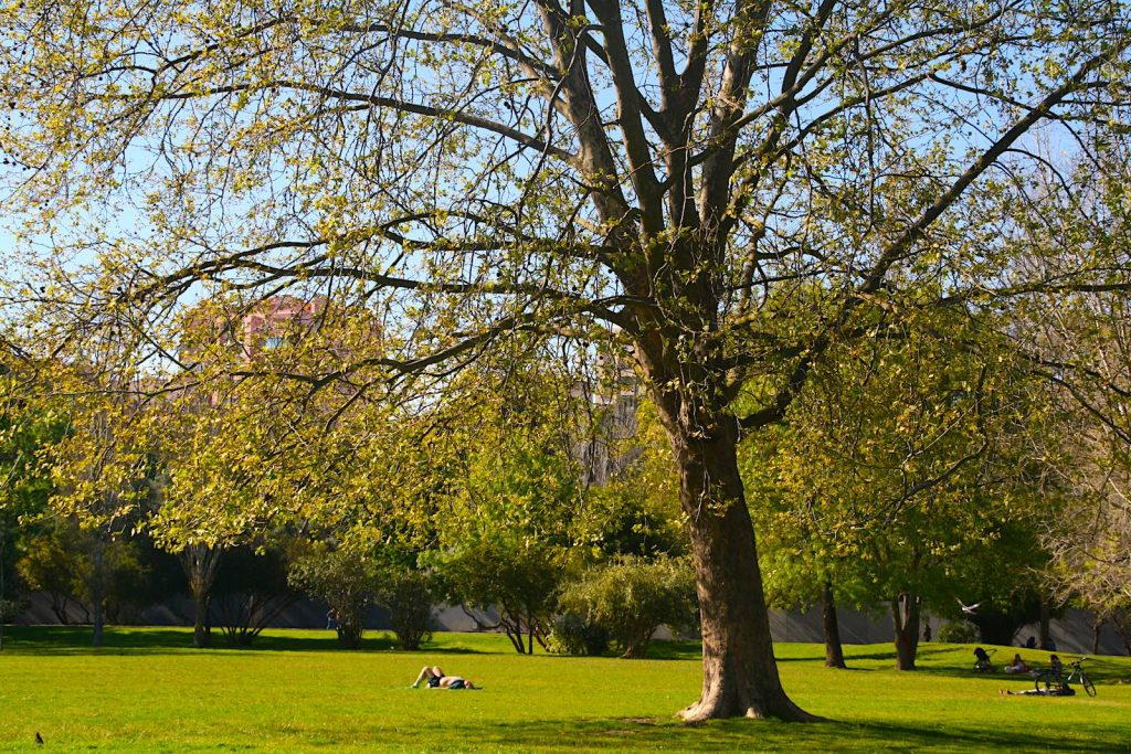 Parque da Quinta das Conchas e dos Lilases, LIssabon