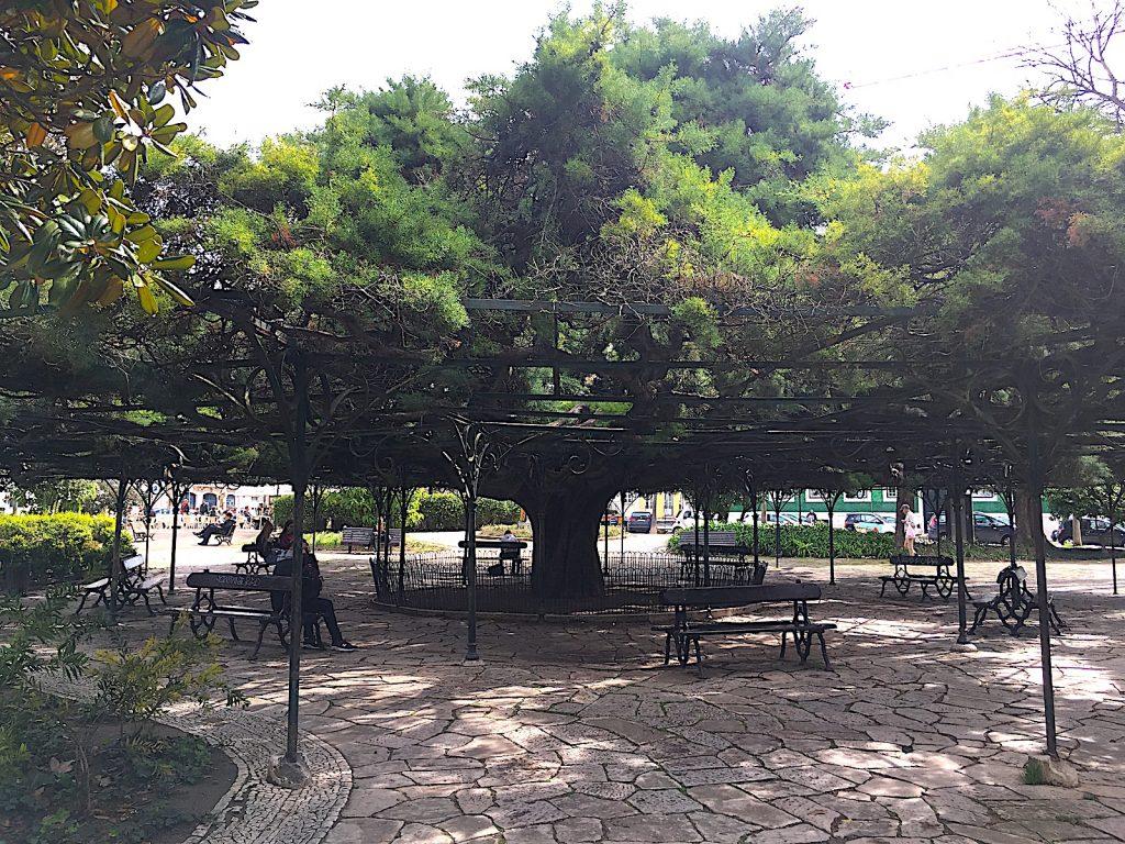 Jardim Principe Real - Baum