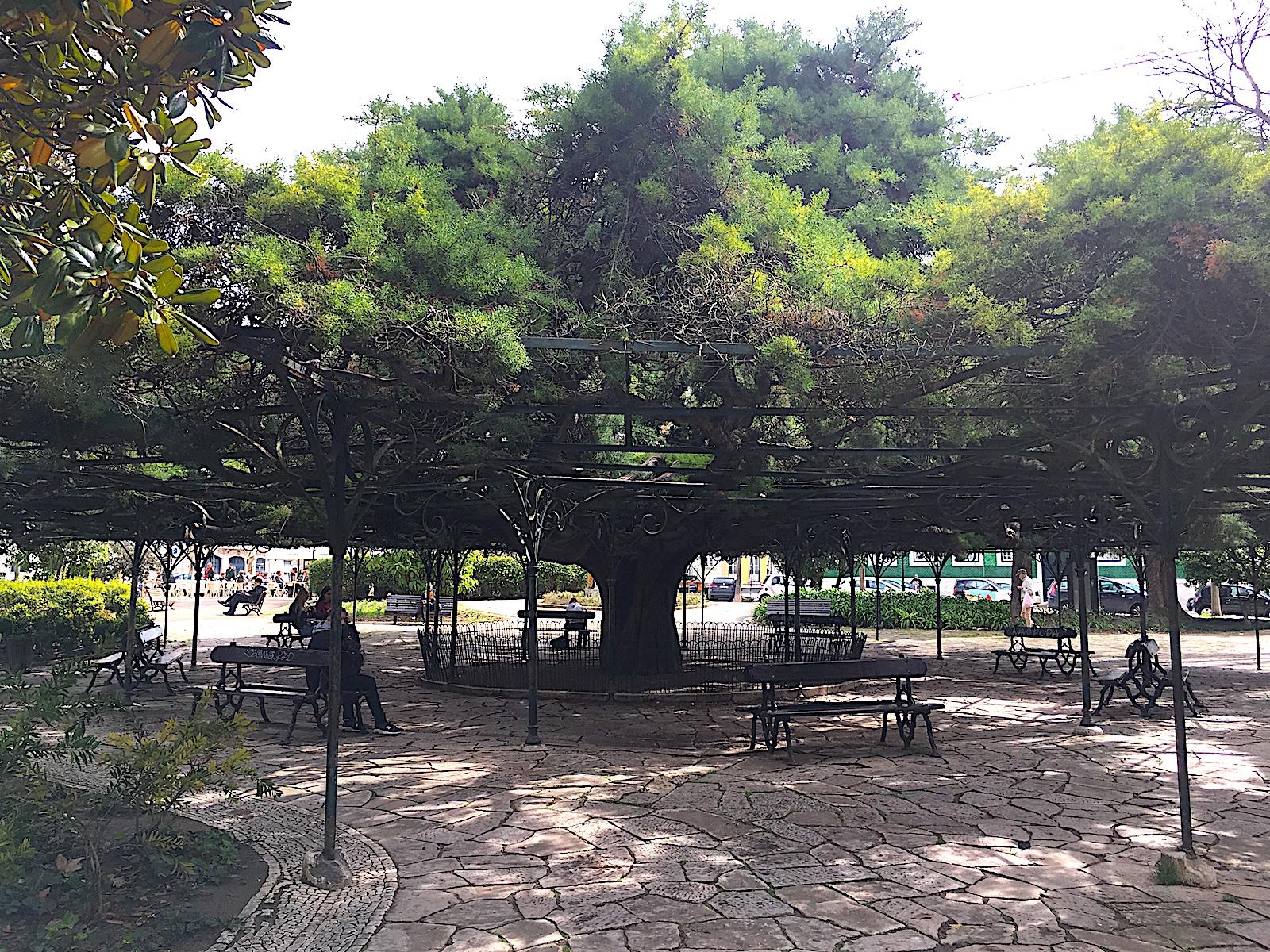 Jardim Principe Real - Boom