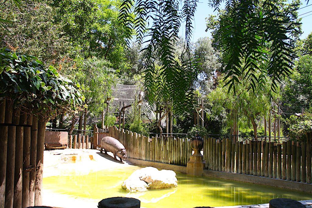 Dierentuin Lisabon nijlpaard