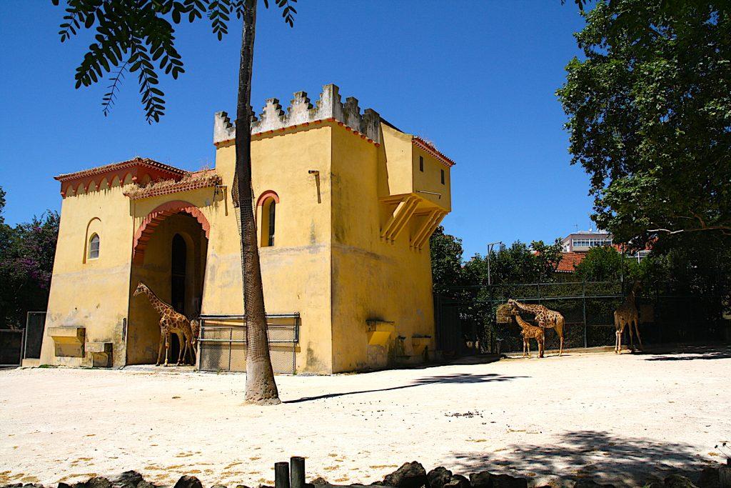 Dierentuin Lissabon Giraffe