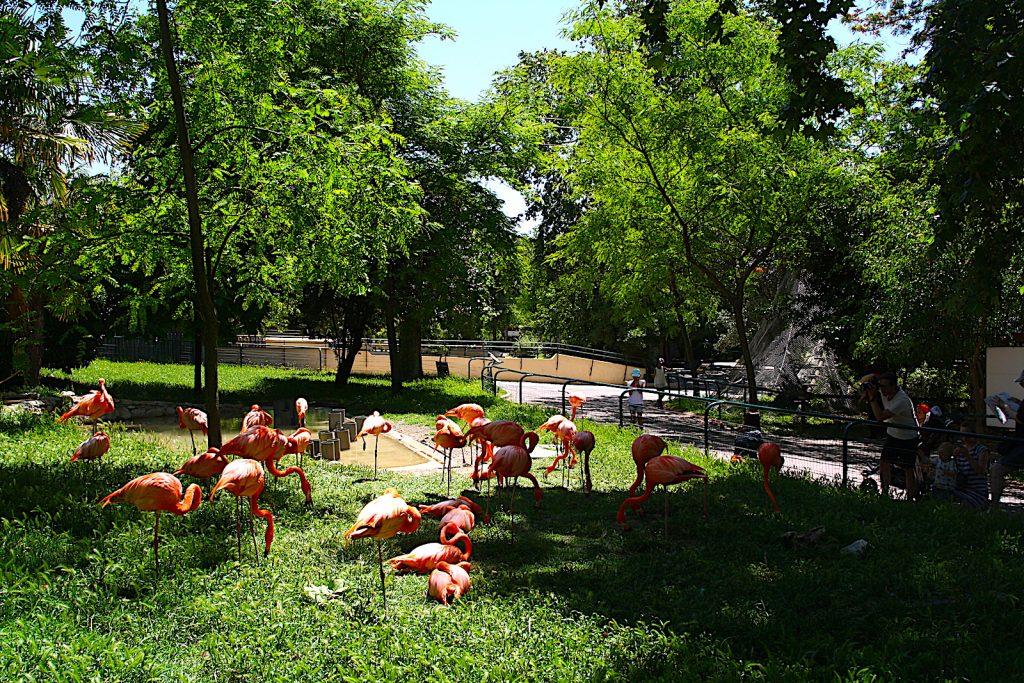 dierentuin Lissabon Flamingo
