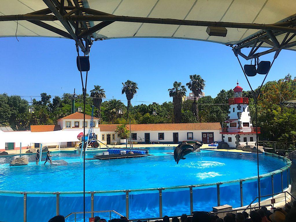 dolfijnenshow dierentuin Lissabon